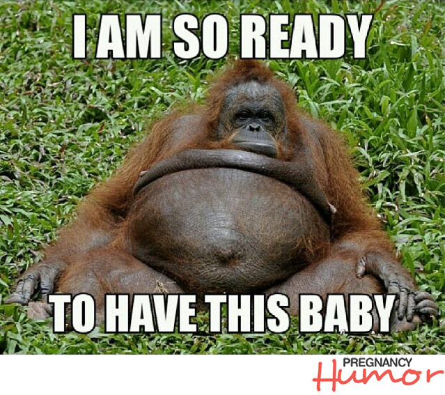 Pregnant Orangutan Saying I am So ready to have this baby