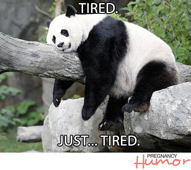 Funny panda memes - photo#24